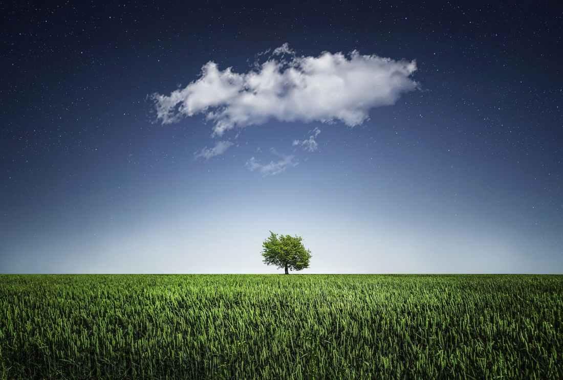 tree-natur-nightsky-cloud.jpg